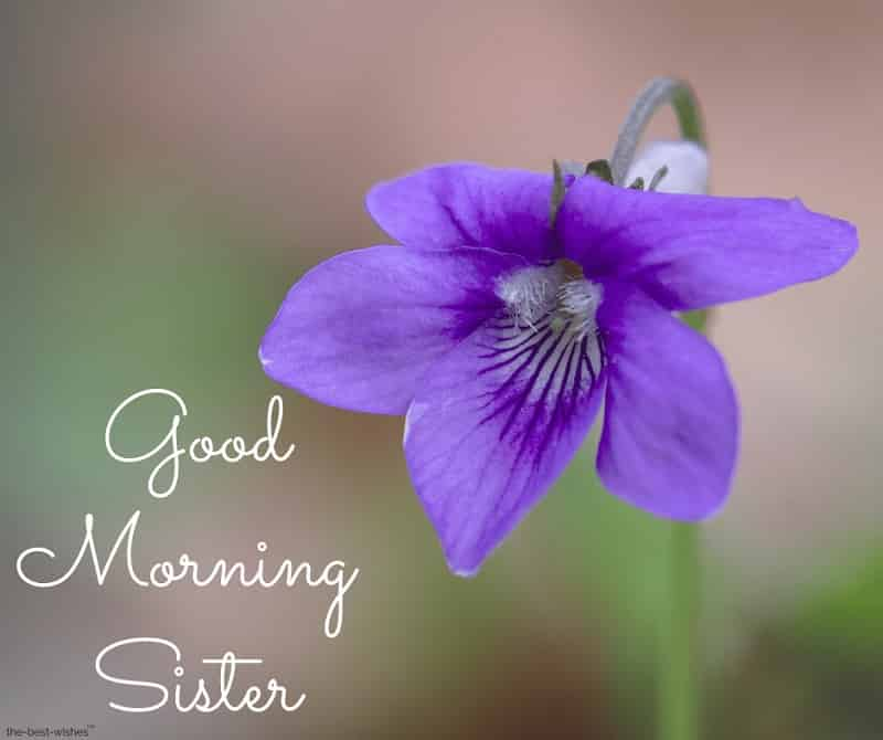 good morning sister rose