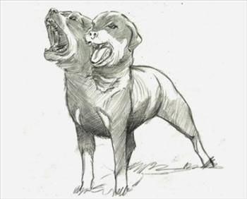İLGİNÇ BİLGİLER KÜTÜPHANESİ: İki Başlı Köpek-ler