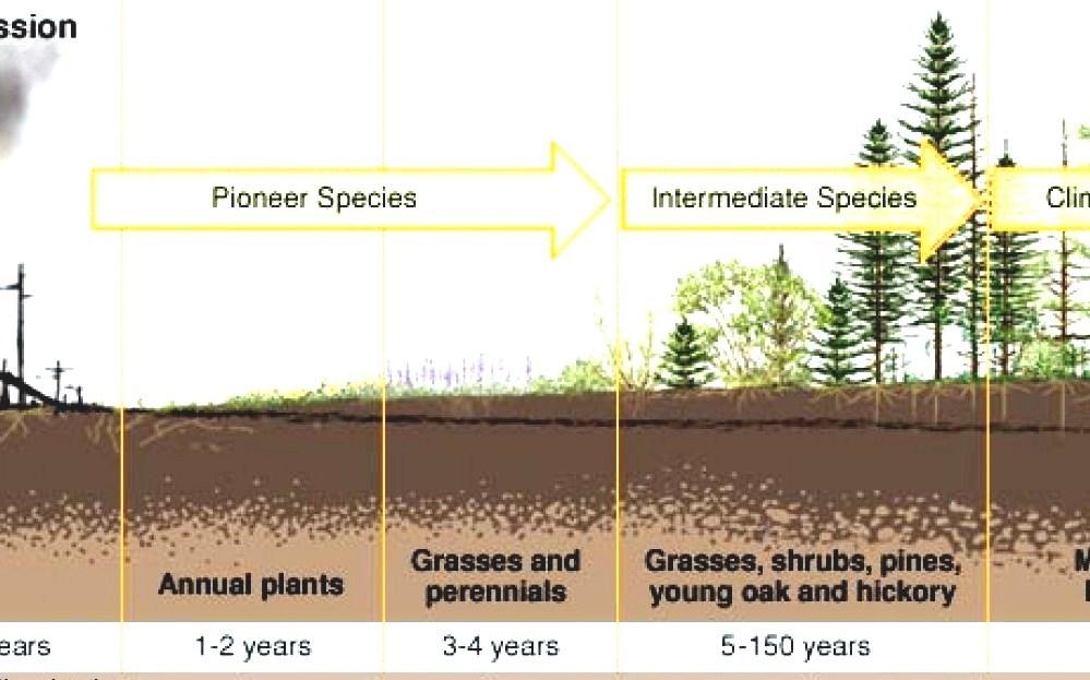 Ecological Succession Forest Succession
