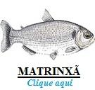 Peixe, Matrinxã