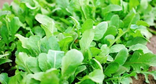 What are the benefits of Watercress Company