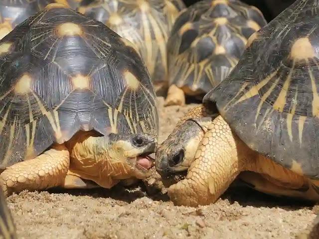 السلاحف, سلاحف, سلحفاة, tortoises, سلاحف النينجا, ذكر السلحفاة, سلحفاه, سلاحف نينجا,