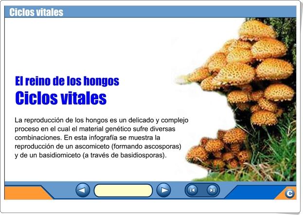 """""""El reino de los hongos"""" (Presentación sobre la reproducción de los hongos)"""