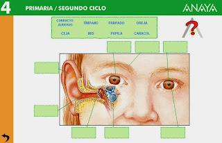http://www.ceipjuanherreraalcausa.es/Recursosdidacticos/CUARTO/datos/04_Cmedio/datos/03rdi/ud07/01.htm