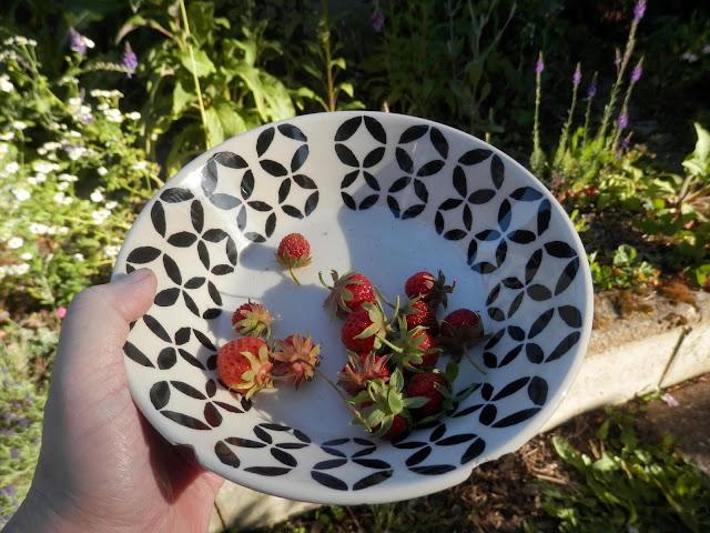 My homegrown harvest, June 2018. From UK garden blogger secondhandsusie.blogspot.com #gardenharvest #homegrownfood #suburbanpermaculture