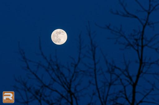 Mēness un koka zari