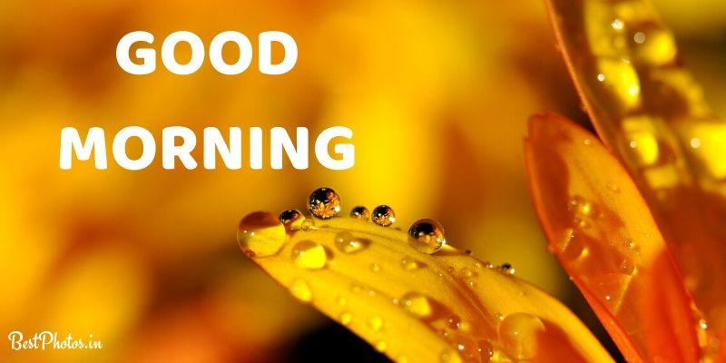 amazing good morning nature images