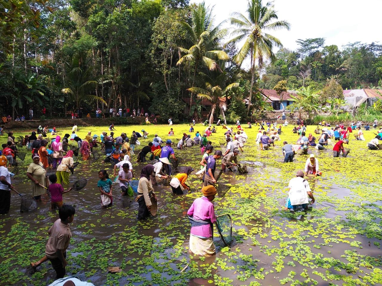 Tradisi Bedah Bendungan 2 Tahun Sekali Desa Pesodongan