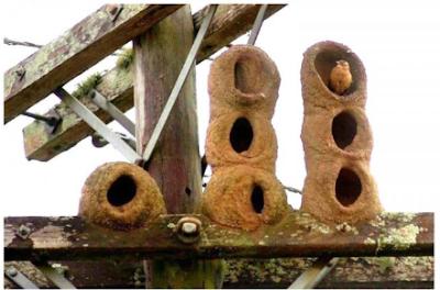 Foto de construcción de nido