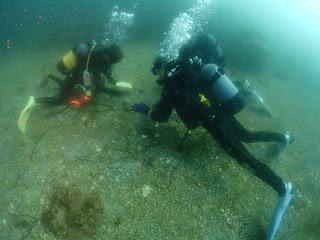 2021年7月14日の柏島ダイビング