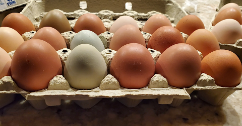 Order your farm fresh eggs HERE!