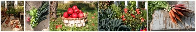 """""""odlingskurs ekologiskt no-dig gardening"""""""