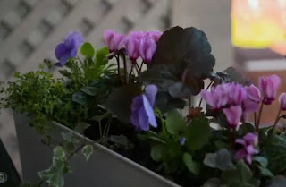 Flower troughs full of pink and blue flowers