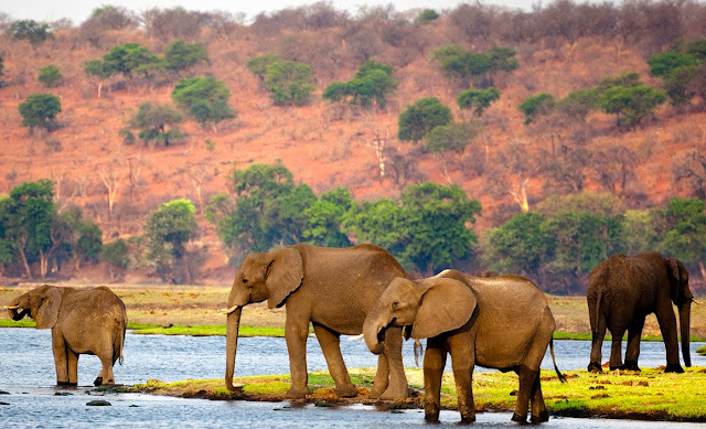 BEST PLACES TO VISIT IN BOTSWANA,botswana,islands in africa 2019,east africa,west africa,best africa,africa 2020,visit africa,kalahari plains,kalahari desert (geographical feature),chobe game lodge,cleanest city in africa,kalahari resorts (tourist attraction)