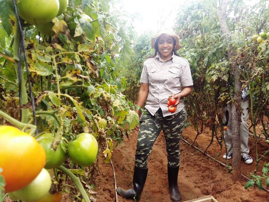 agric diaries maria zaloumis the tomato queen reaps big from the
