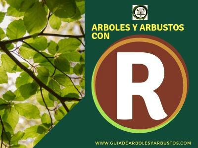Lista de arboles y arbustos que empiezan por la letra R