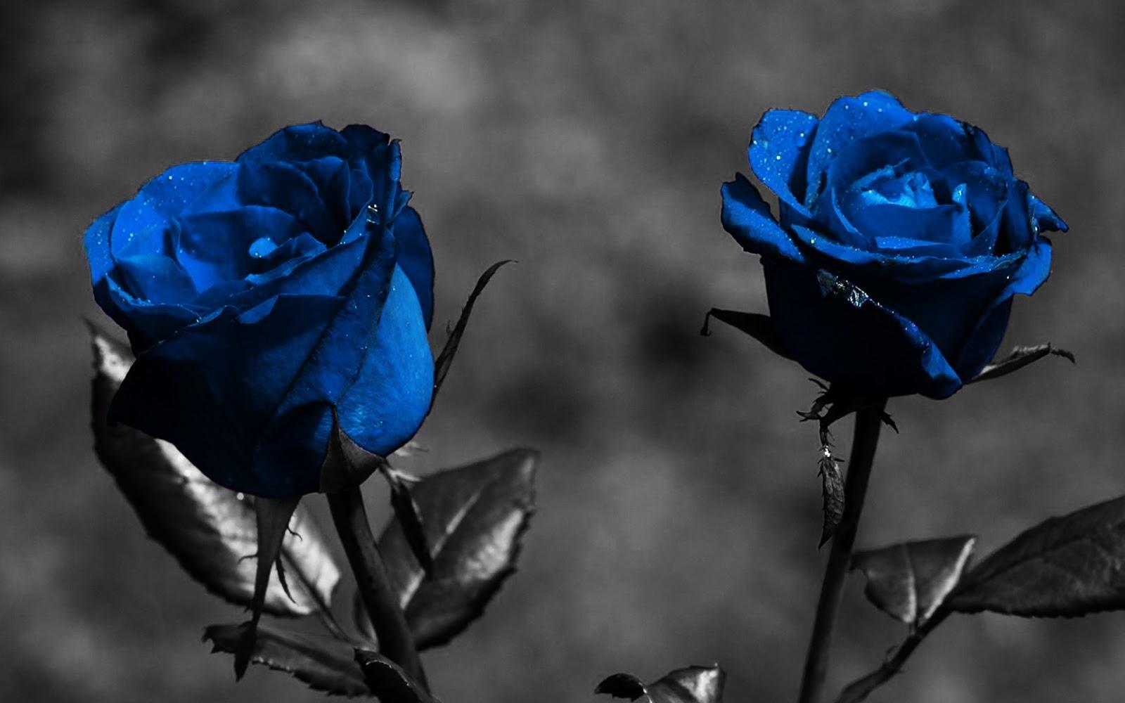 Palabras De Barro: Una Rosa Azul
