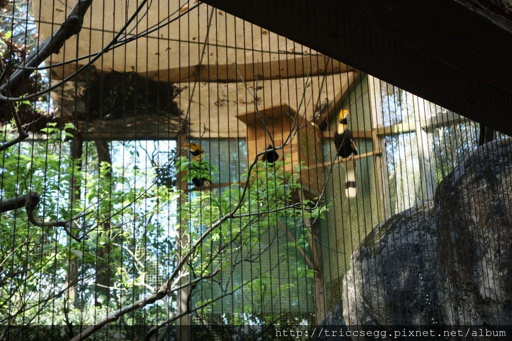 台北動物園(54).jpg
