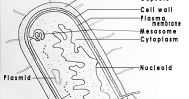 DRAW IT NEAT : How to draw Bacteria