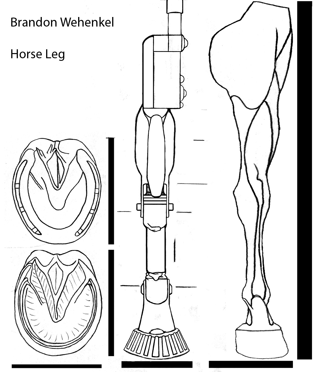 Prosthesis Horse Leg Anatomy Diagram - Application Wiring Diagram •