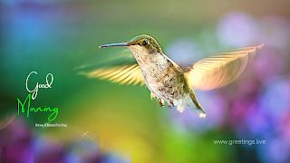 Morning greetings with hummingbird flying