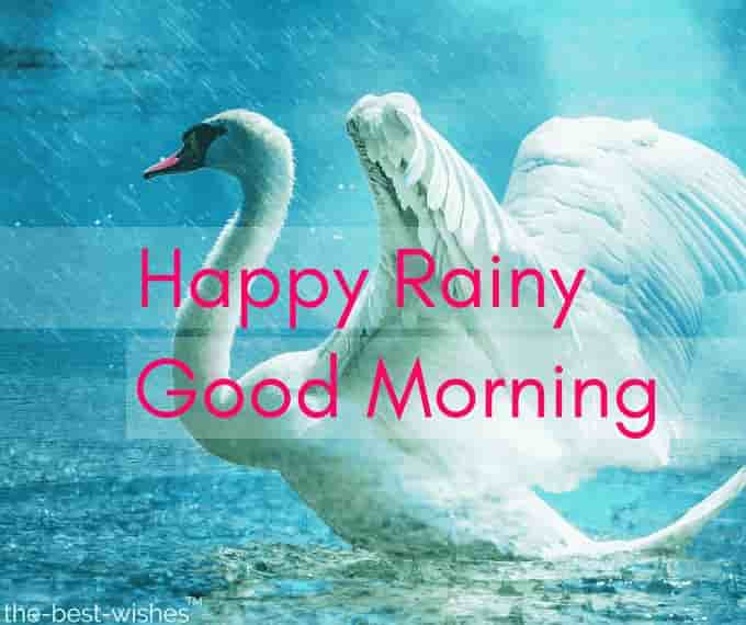 happy rainy good morning with swan