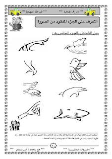 11 - مجموعة أنشطة متنوعة للتحضيري و الروضة