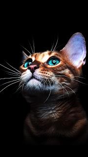 Cat In The Dark Mobile HD Wallpaper