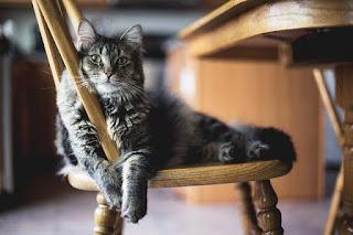 6 Penyakit Yang Akan Diderita Kucing Jika Salah Makanan