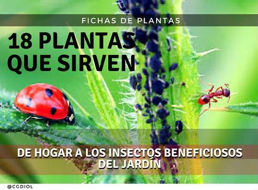 18 plantas que sirven de hogar a los insectos beneficiosos for Insectos del jardin