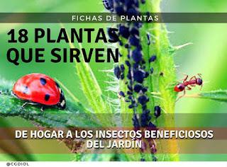 Plantas que Atraen a los Insectos Depredadores