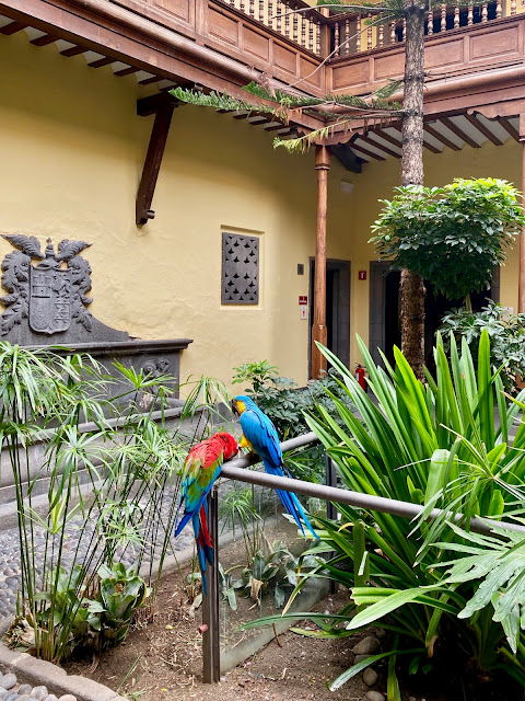 Macaws in the courtyard of the Casa de Colon, Las Palmas, Gran Canaria, Spain