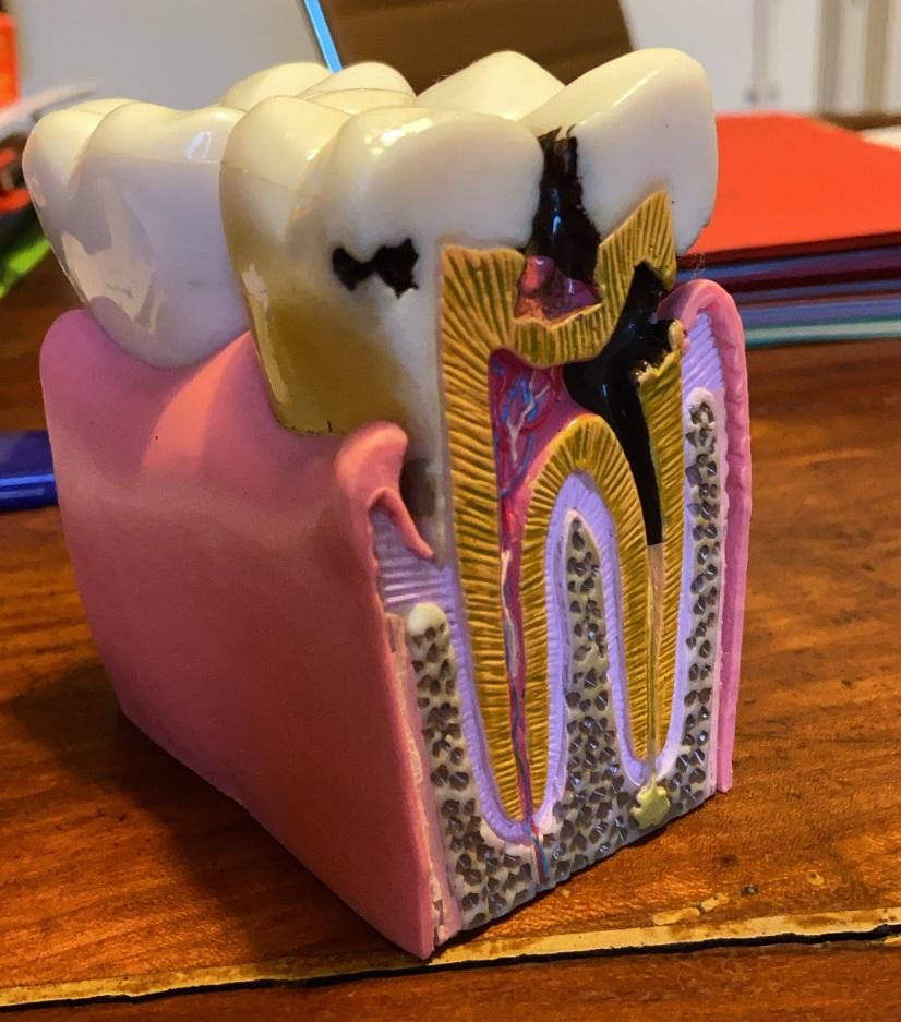 hygiene bucco dentaire