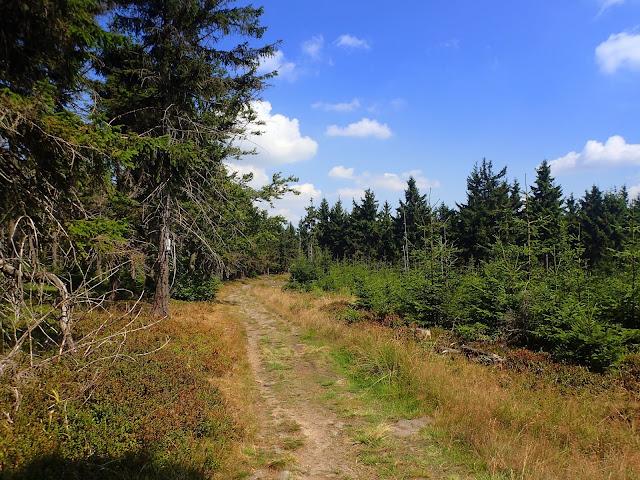 Ścieżka na Małą Sowę (972 m n.p.m.)