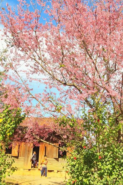 Chiêm ngưỡng vẻ đẹp tuyệt trần của vùng ngoại ô Đà Lạt 14