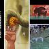 #RIPHumanity, Gajah Hamil Mati Diberi Nanas Berisi Petasan