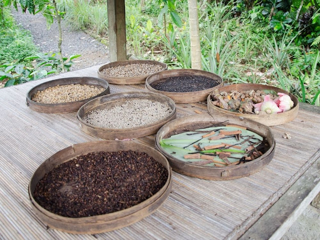 Brief History of Luwak Coffee