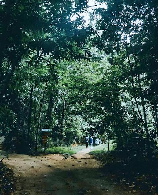 රාජකීය වන උද්යානය - උඩවත්ත කැලේ , මහනුවර 🍃🌳🎍 ( Royal Forest Park - Udawattakele ) - Your Choice Way