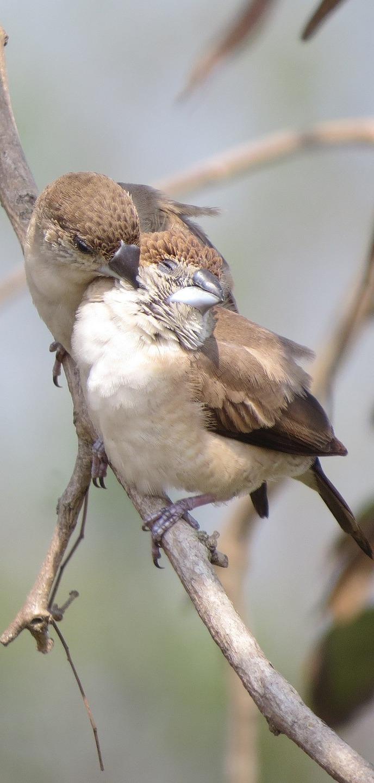 Bird love on display.
