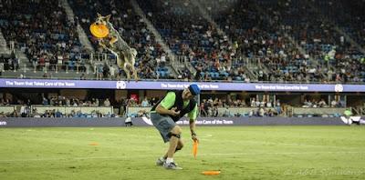 Soaring Blue K9 Disc Dog halftime show, Vader