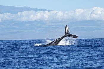 blue whale modern history in hindi