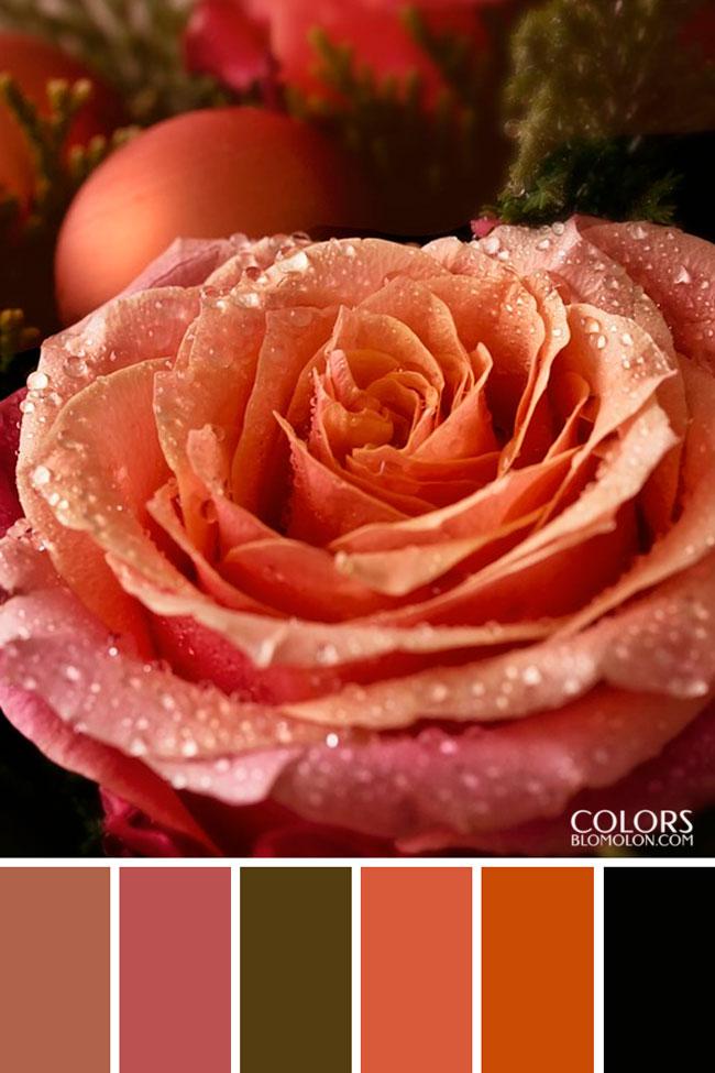 paletas_de_colores_20_especial_de_temporada_3