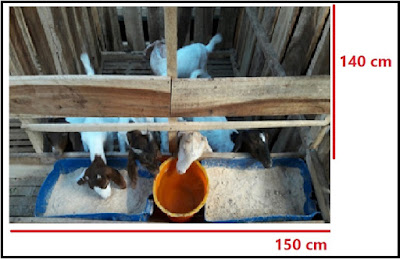 Kandang Kambing Domba| Kandang cempe lepas sapih kapasitas 6 ekor dg tempat pakan-minum