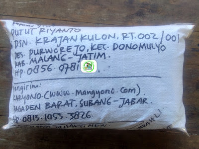 Benih padi yang dibeli   PUTUT RIYANTO  Malang, Jateng.  (Setelah packing karung ).