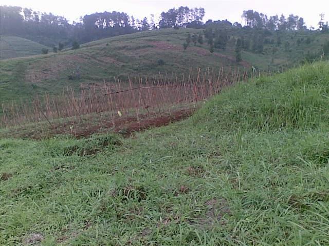 Foto(5197) Jual Tanah Milik | Kebun 23 Ha, Lokasi Puncak jual tanah di puncak