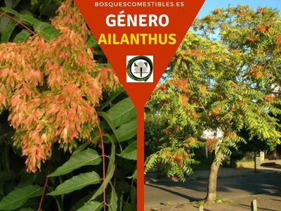 Lista de arboles en la Península del Género Ailanthus comúnmente llamados Aliantos