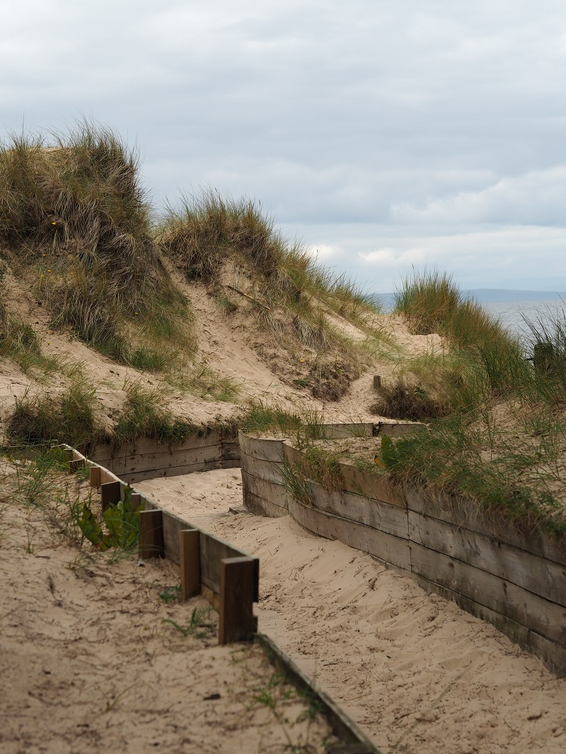 Grassy dunes at Roseisle beach on the Moray Coast