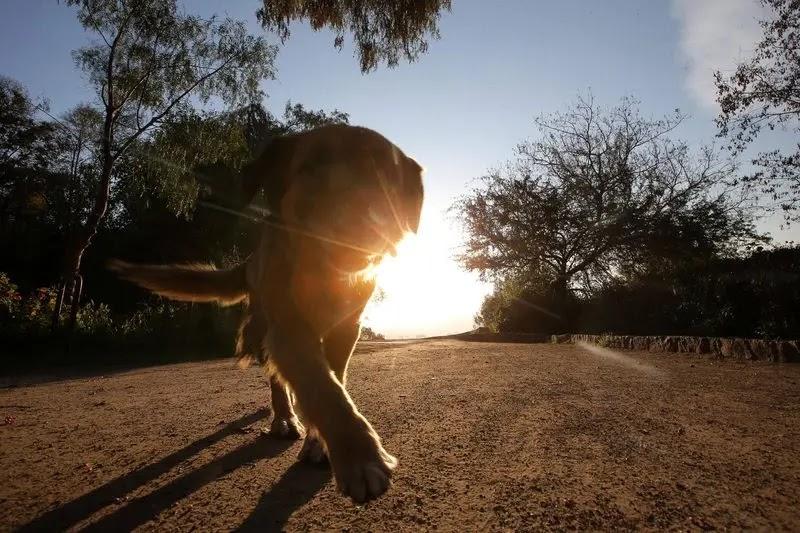 Ojo con los paseos del perro: las garrapatas están en el pasto de todas las comunas