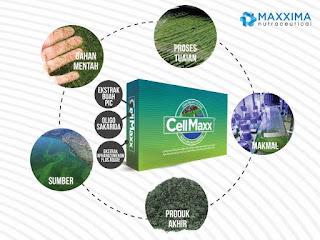 CellMaxx Obat Herbal Apa?