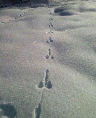 Seltsame Tierabdrücke im Schnee